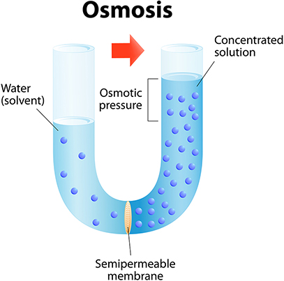diagram of osmosis